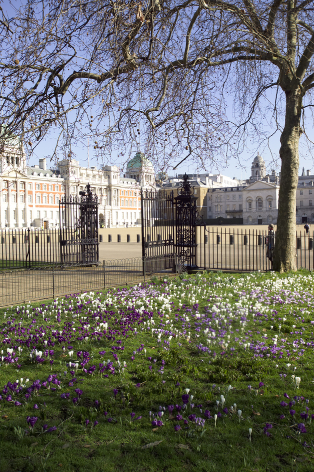 St James's Park - Spring flowers - � Indusfoto Ltd