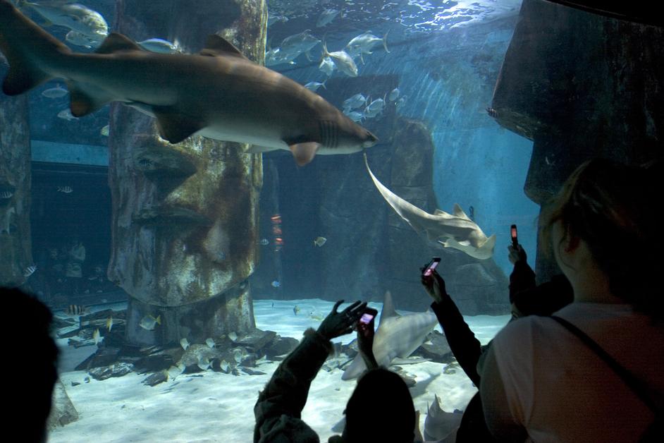 Sea Life London Aquarium Images South Bank London LondonTown.com