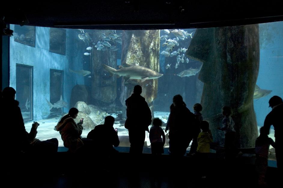 Sea Life London Aquarium Images South Bank London Londontown Com