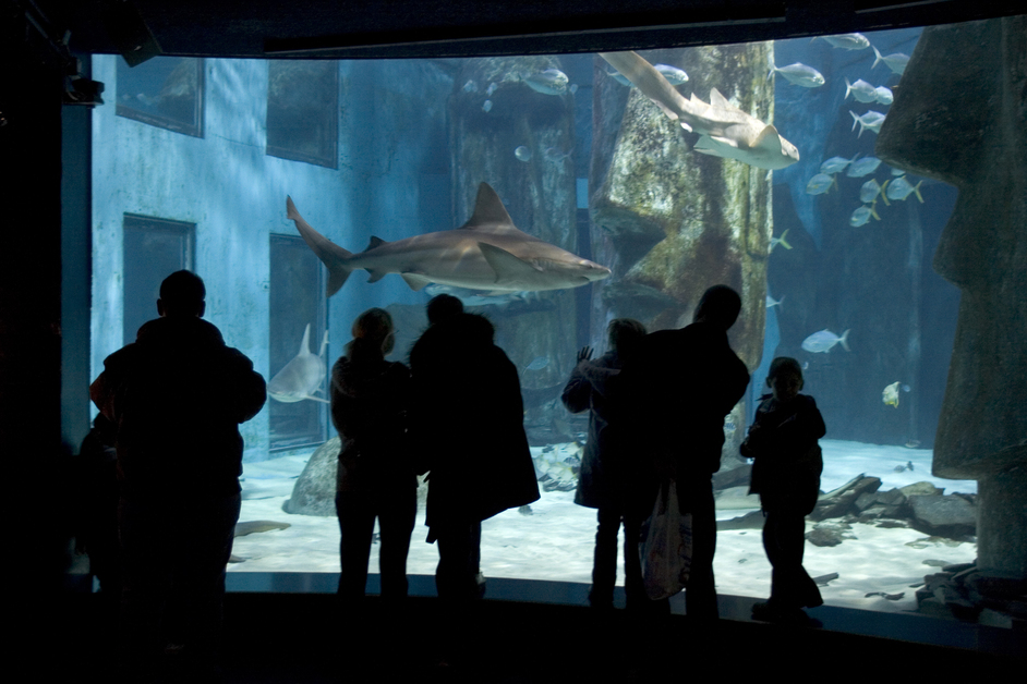 how to get to sea life london