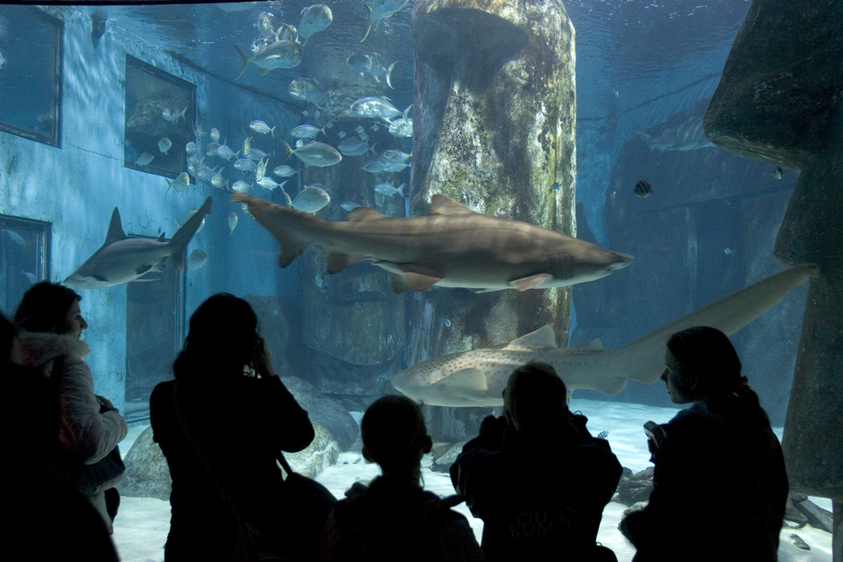 Sea Life London Aquarium Images South Bank London Londontown Com