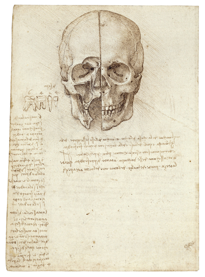 Leonardo da Vinci: Anatomist - A skull sectioned,1489, Leonardo da Vinci. Pic credit: The Royal Collection (c) 2011, Her Majesty Queen Elizabeth II
