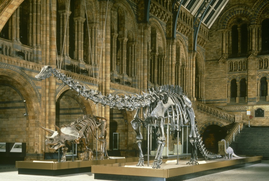 What S On At Natural History Museum London