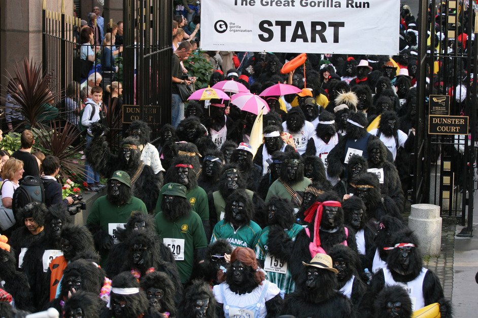 Great Gorilla Run