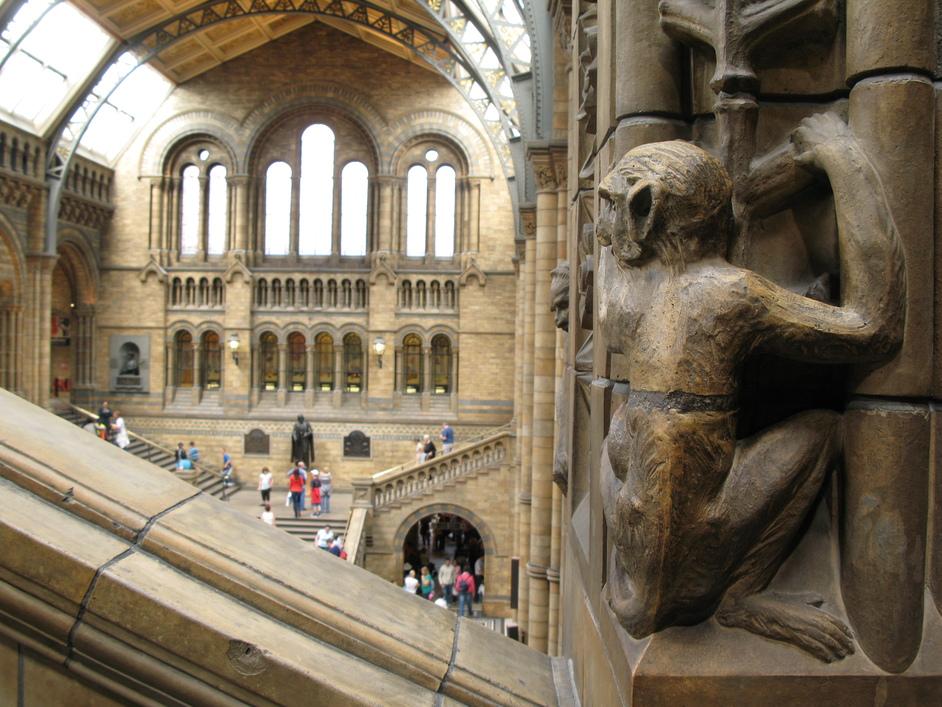 natural history museum images south kensington london londontown com