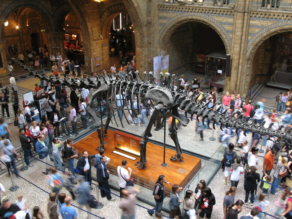 Natural History Museum - The Central Hall
