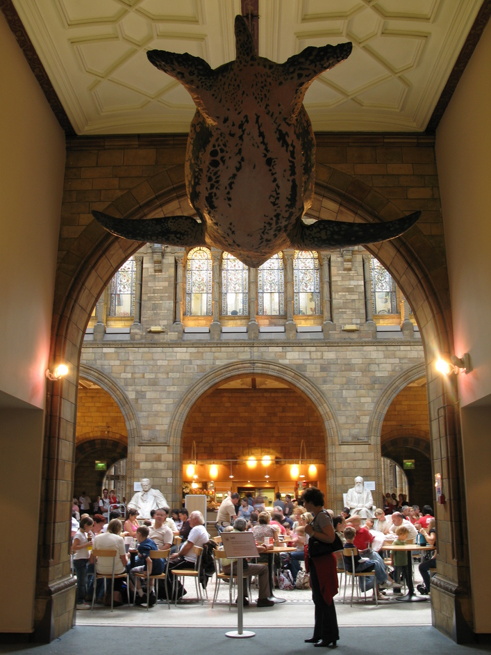 Natural History Museum - Walk under the giant turtle from the Mammals Gallery through to the Cafe.