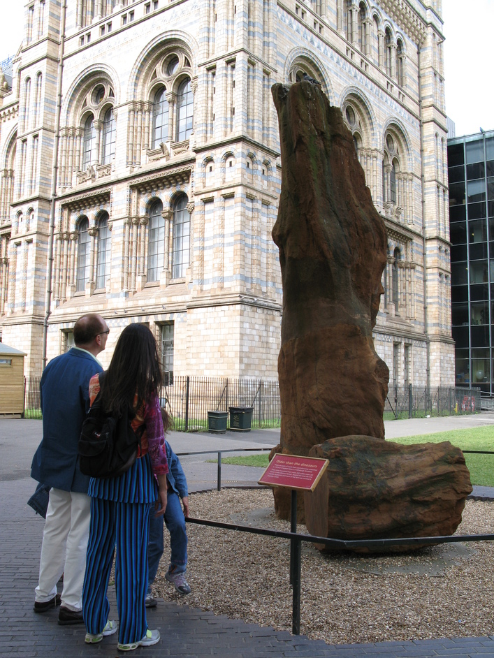Natural History Museum - Fossilized tree outside the Natural History Museum