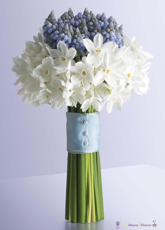 Moyses Flowers