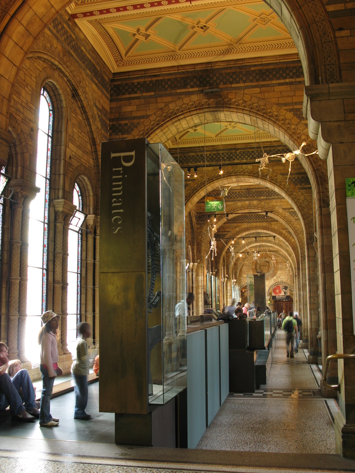 Natural History Museum - The Primates Gallery on Floor 1