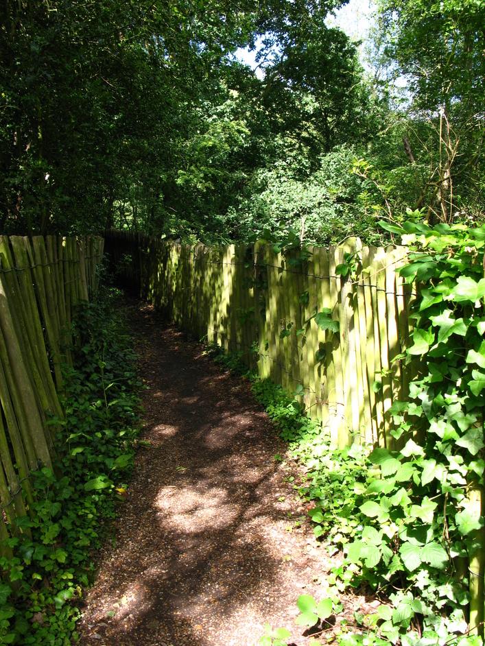 Hampstead Heath Swimming Ponds - Lane into the Kenwood ladies' bathing pond