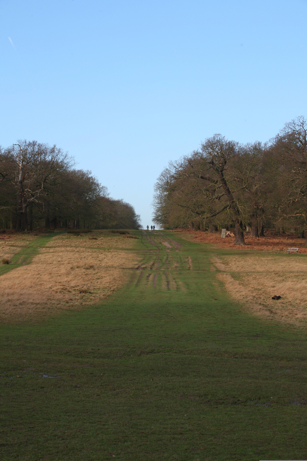 Richmond Park - View along Queen's Ride - � Giles Barnard