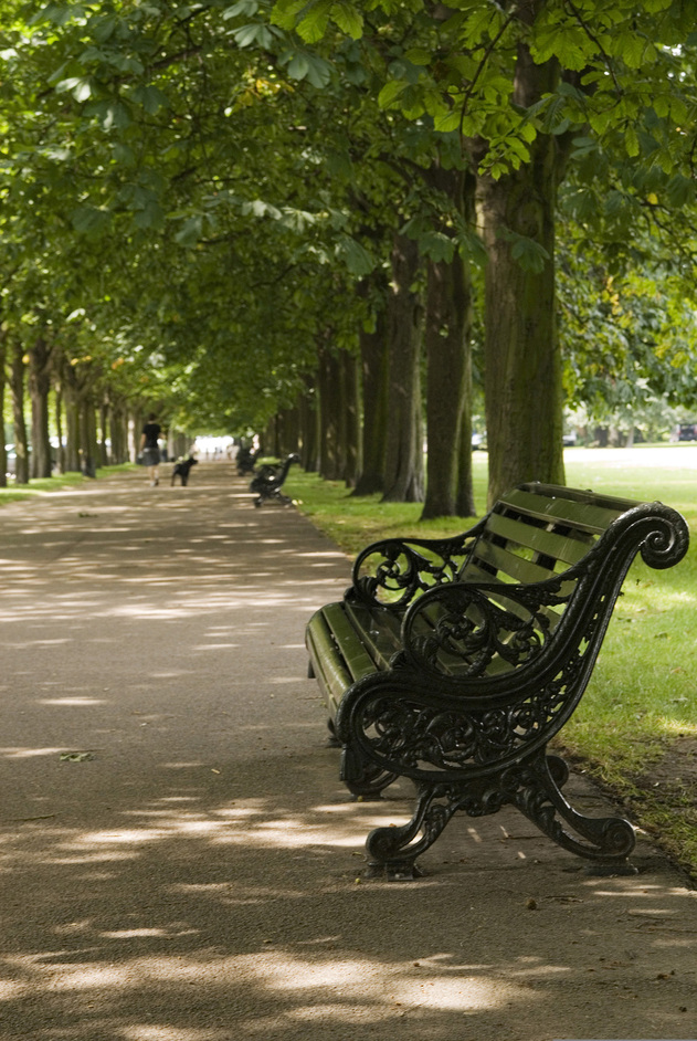 Greenwich Park - Park Bench and chestnut trees - © Anne Marie Briscombe