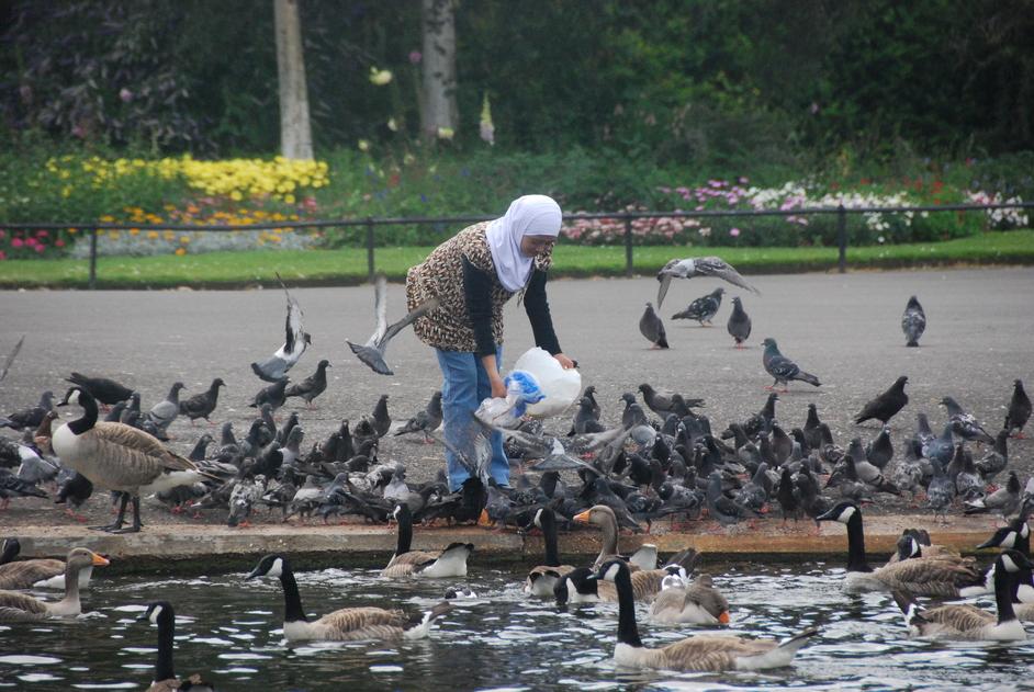 Regent's Park - Regent's Park