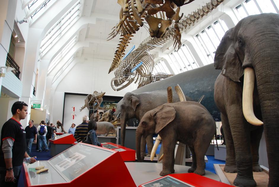 Natural History Museum - Natural History Museum