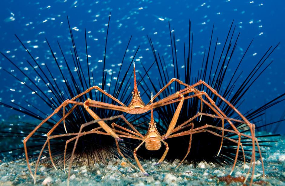 Самые длинные ноги океана