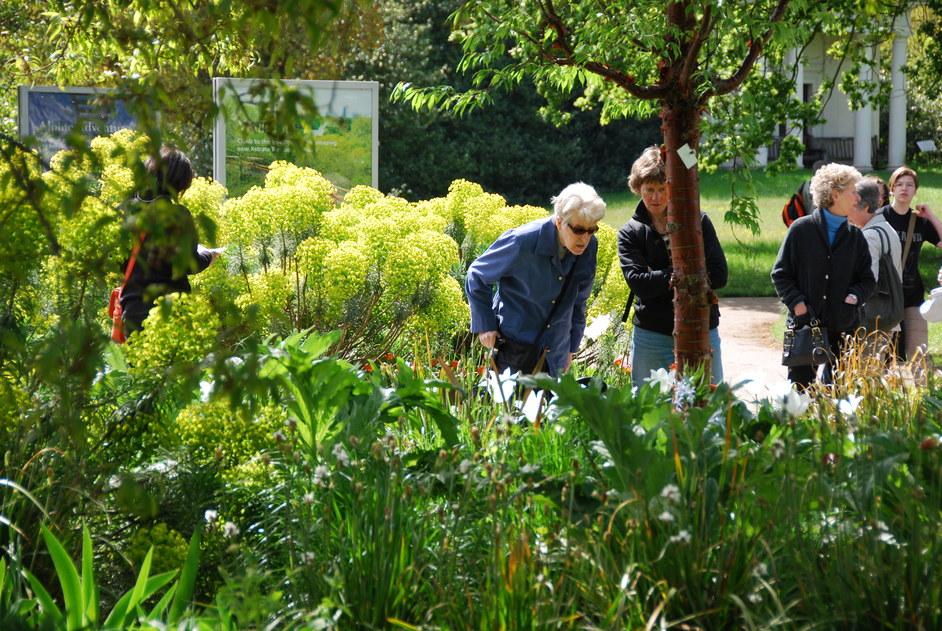 Kew Gardens (Royal Botanic Gardens) - Kew Gardens