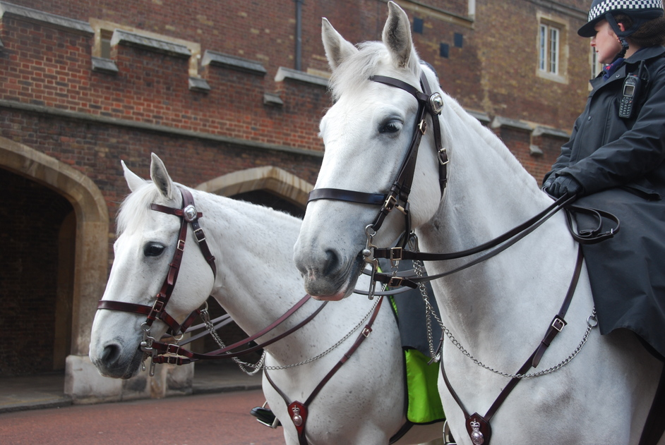 St James's Palace - St James's Palace Police Horses