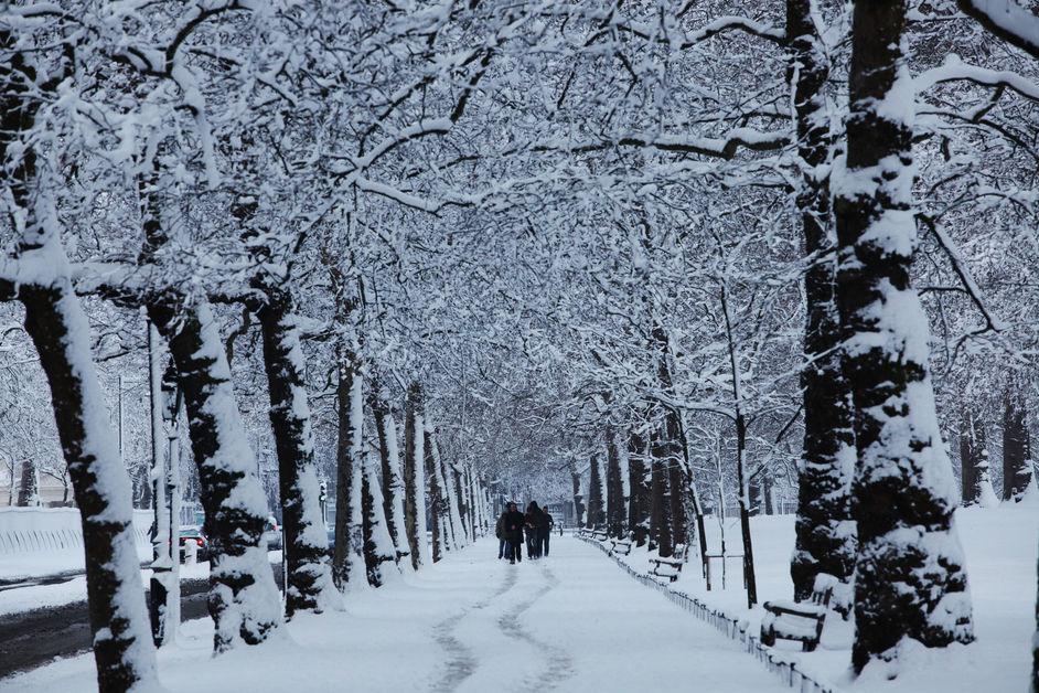 St James's Park - Avenue of trees in the snow - � Giles Barnard