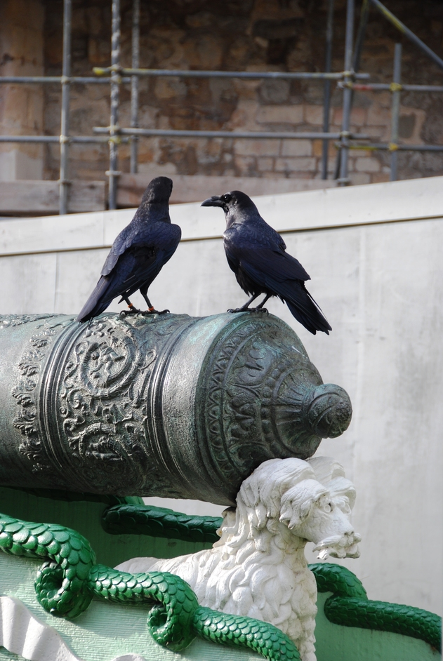Tower Of London - Ravens At The Tower Of London