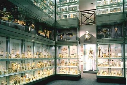 Hunterian Museum