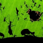 Veolia Environnement Wildlife Photographer of the Year