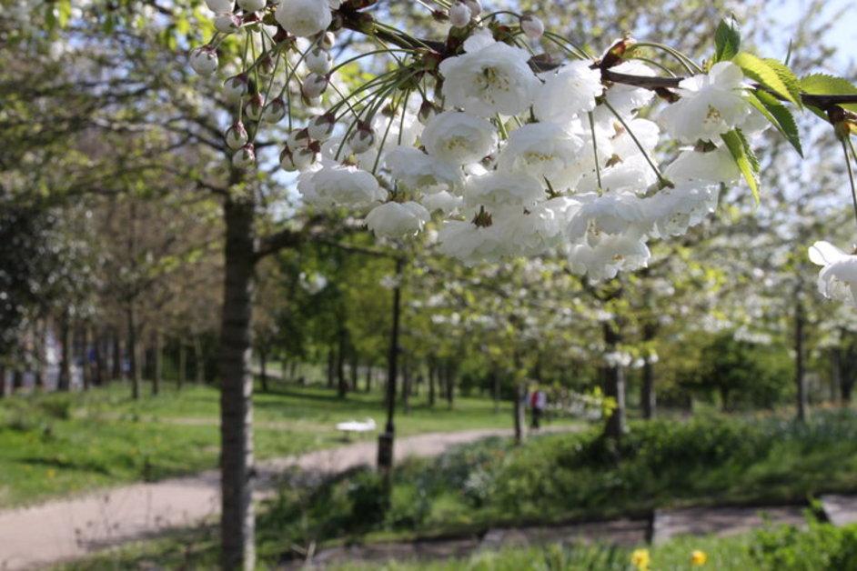 Mile End Park