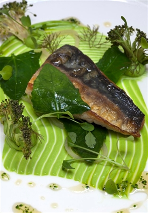 Roganic - Seawater cured Kentish mackerel