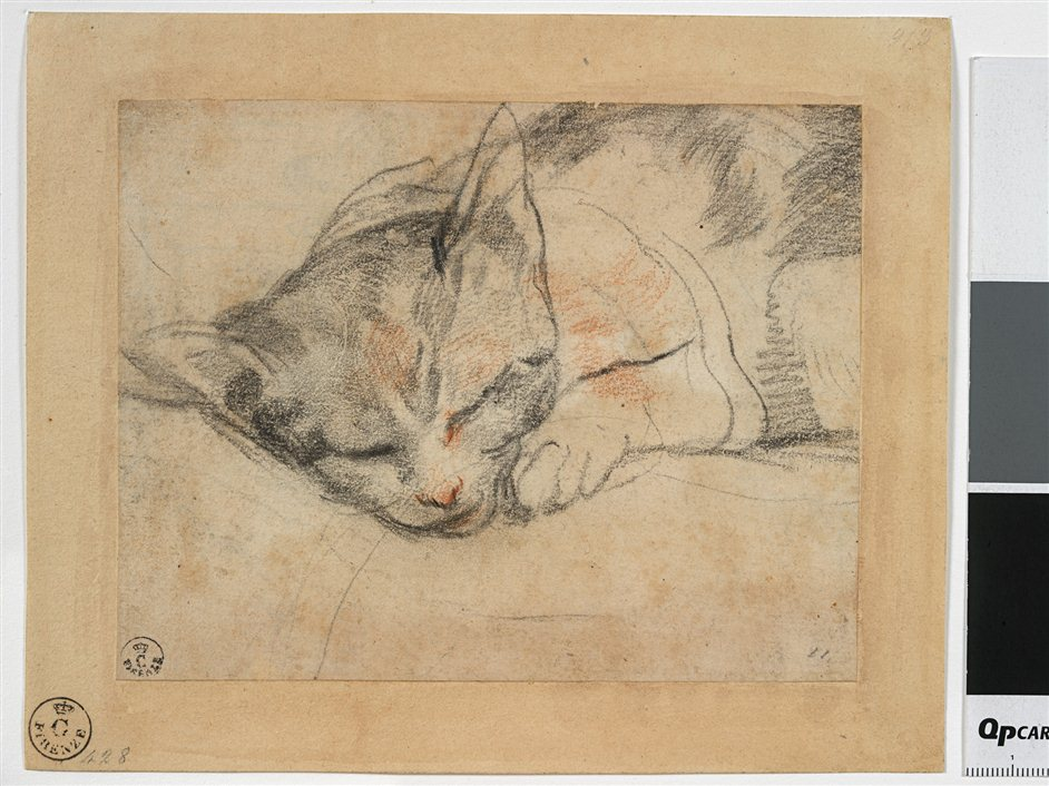 Barocci: Brilliance and Grace - X7756 Federico Barocci (1535-1612),,Study for a cat.Red and black chalk on paper, laid down. Gabinetto Disegni e Stampe degli Uffizi,Florence 913 ORN © 2013. Photo Scala, Florence - courtesy of the Ministero Beni e Att. Culturali
