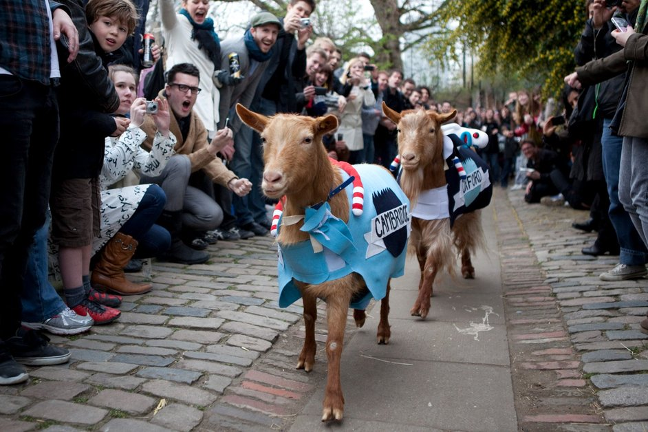 Oxford vs Cambridge Goat Race - � Tyson Benson