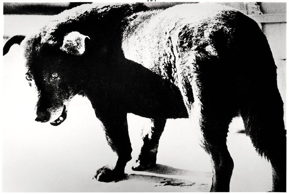 William Klein/Daido Moriyama - Daido Moriyama, Misawa, 1971 © Daido Moriyama