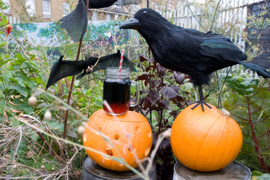 Midnight Apothecary Halloween Special - Image courtesy of Eleanor Salter Thorn