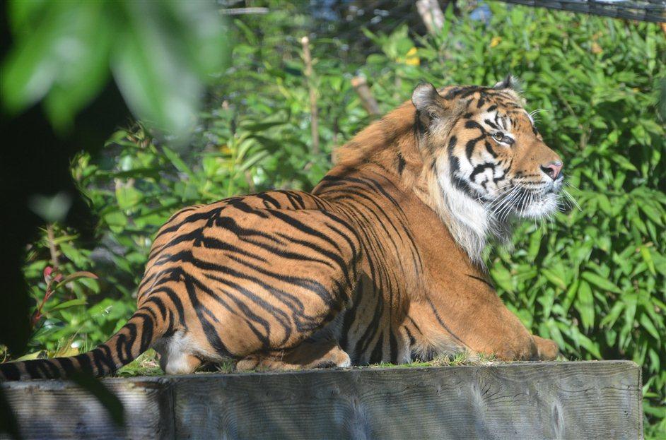 Tiger Territory