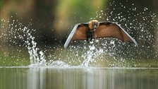Veolia Environnement Wildlife Photographer of the Year - Grey-headed flying fox by Ofer Levy by Ofer Levy