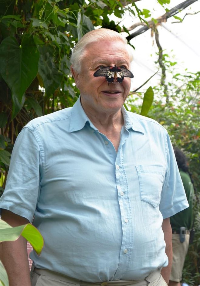 ZSL London Zoo - David Attenborough at Butterfly Paradise, 2012