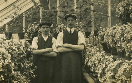 Floriculture: Flowers, Love and Money - Gardeners in Conservatory c1910