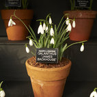 Chelsea Physic Garden Snowdrop Days hotels title=