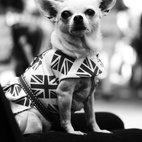 Old Spitalfields Market Paw Pageant