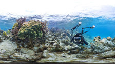 Coral Reefs: Secret Cities of the Sea - Belize, Caribbean by Catlin Seaview Survey