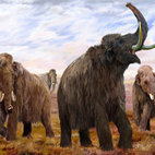 Mammoths: Ice Age Giants