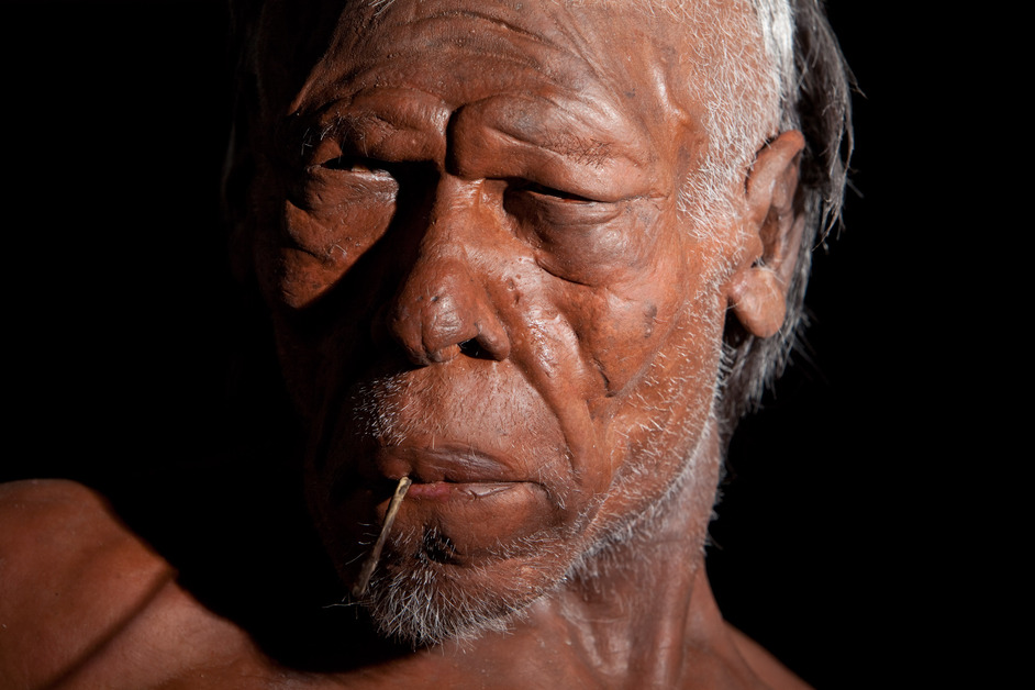 Britain: One Million Years of the Human Story - Homo Sapien model © Trustees of the Natural History Museum
