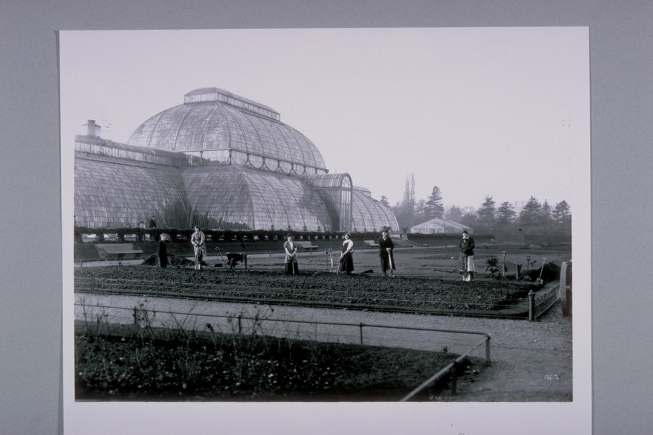 Plants, People and the Products of War: a Centenary Tribute - Palm House, Courtesy of the Director and Trustees of the Royal Botanic Gardens, Kew