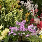 RHS London Orchid Show and Plant Fair