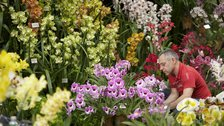 RHS London Orchid Show and Botanical Art Show by RHS