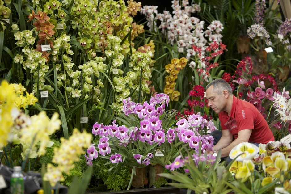 RHS London Orchid Show and Botanical Art Show - image copyright RHS