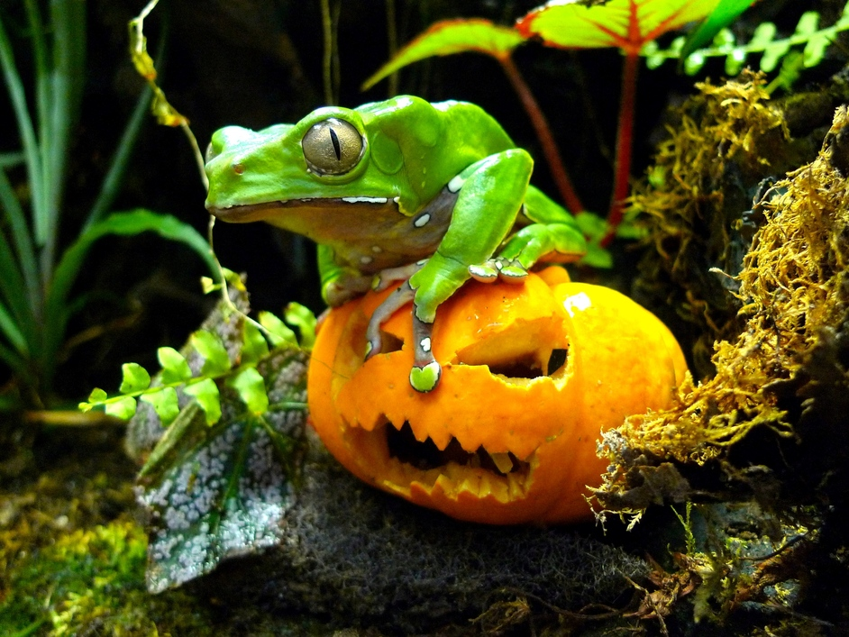 Boo at the Zoo - Image copyright: Grant Kother