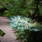 World Woodland Garden