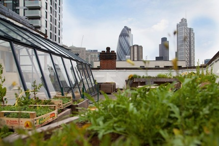 The Culpeper: Rooftop Bar, Grill and Greenhouse