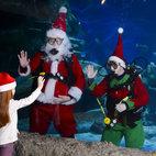 Santa Swims at Sea Life London Aquarium