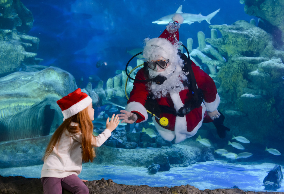 Santa Swims At Sea Life London Aquarium Images South Bank London